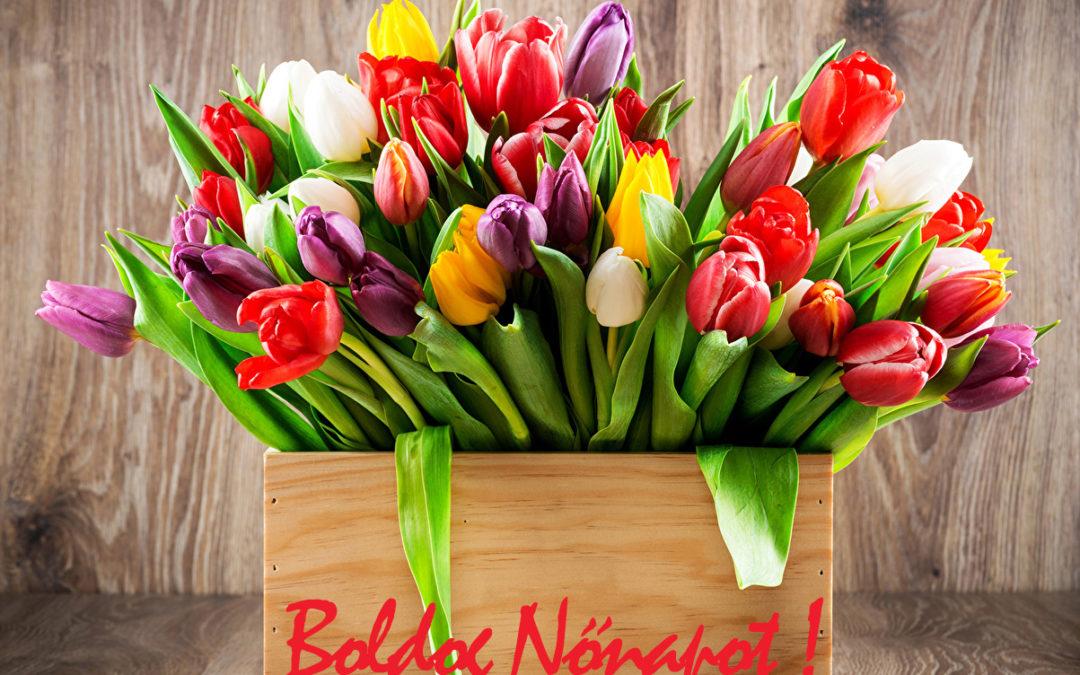 tulipán-1080x675-1.jpg